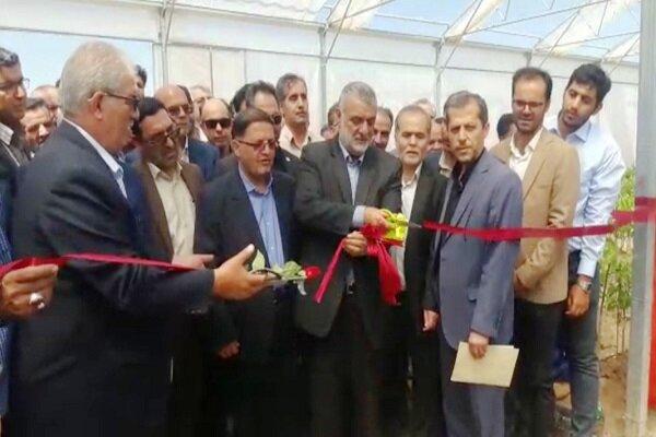 طرح زنجیره تولید نهال گواهی شده گردوی پیوندی درتویسرکان افتتاح شد