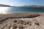  کشف فسیل جانوری قدیمی در کوههای روستای «رودیک» چابهار