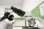 برترین مراکز تحقیقاتی دانشگاههای علوم پزشکی معرفی شدند/ سهم مقالات بالینی و بیومدیکال