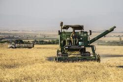 امیدواریم شورای نگهبان طرح دو فوریتی اصلاح خرید تضمینی محصولات کشاورزی را تایید کند