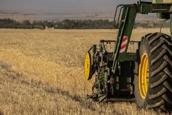 کشت جو در ۳۲ هزار هکتار از اراضی کشاورزی قزوین آغاز شد