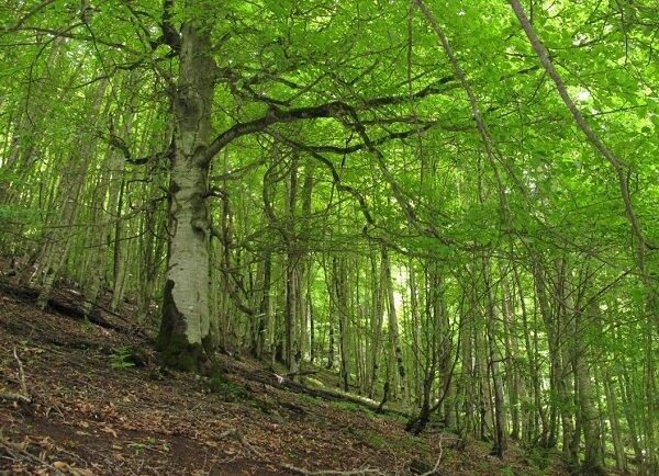 60 هزار هکتار جنگل کاری در سراسر کشور انجام می شود