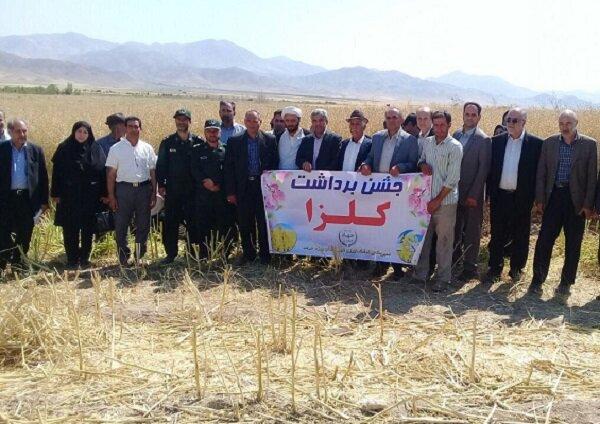 ضرورت حمایت از کشاورزان/ بذر هیبریدی کلزا کشت می شود