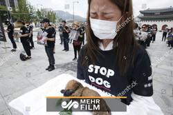 فیلمی از تظاهرات ضد «سگ خوری» در کره جنوبی