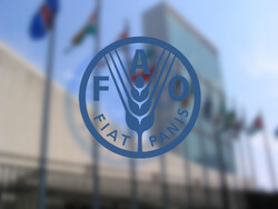 FAO Food Price Index steady in June