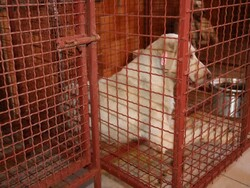 مرکز کنترل جمعیت سگ های آزاد در سنندج راه اندازی شد