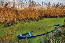 'Nano bioremediation on Anzali wetland worrisome'