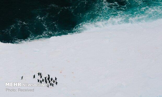 آب شدن یخ های قطبی