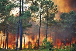 'Humans responsible for over 95% of wildfires'