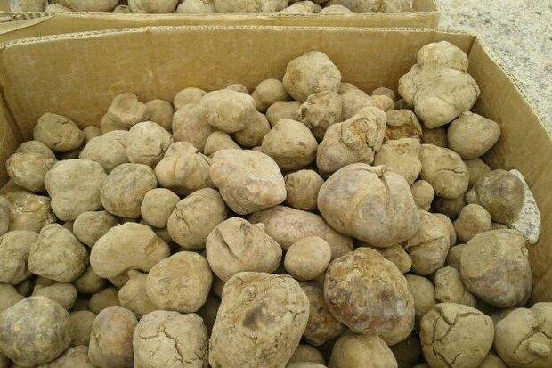توقیف محموله میلیاردی قارچ ترافل قاچاق در گنبدکاووس