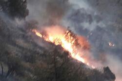 ۷ هکتار از منابع ملی و جنگلهای پلدختر طعمه حریق شد