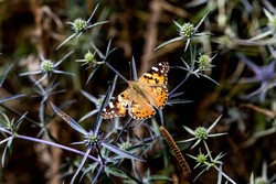 Dünyanın en güzel vahşi doğa fotoğrafları