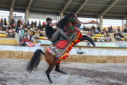 Tabriz hosts Arabian Purebred Horse Beauty Festival