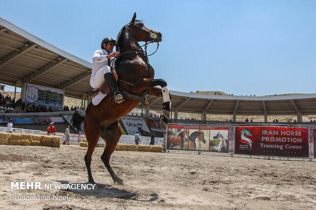 """مهرجان """"الفرس العربي الاصيل"""" في تبريز / صور"""