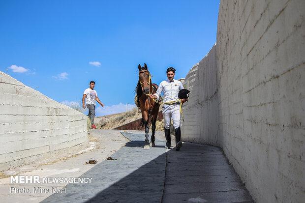 Arap Atı Festivali