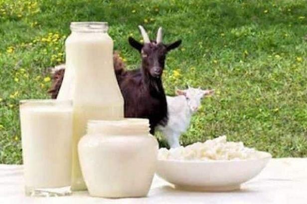 شیر بُز برای سلامت روده نوزاد مفید است,