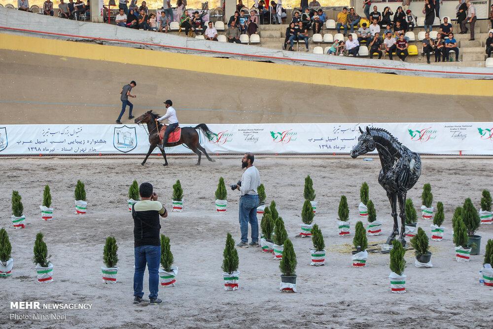 """مهرجان """"الفرس العربي الاصيل"""" في تبريز"""