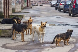 Scheme launched to control stray dog population in northeast Tehran