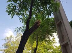 نباید بگذاریم حتی یک درخت دیگر قطع شود