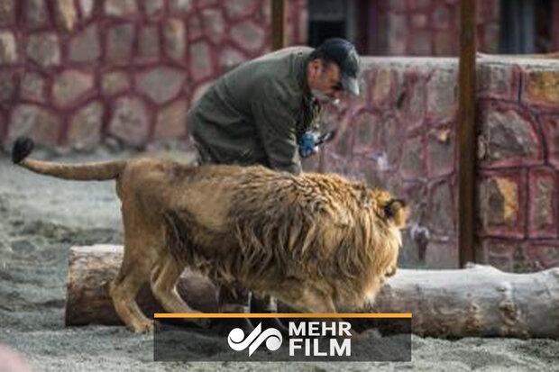 مربی که دیروز شیر به او حمله کرد، کیست؟