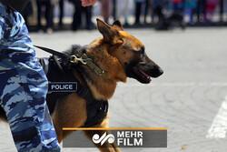 Afganistan'da mayın arama köpekleri