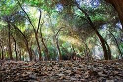 پرونده الحاق ۲ جنگل دزفول به منطقه حفاظت شده دز درحال تصویب نهایی
