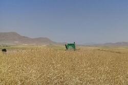 رونق تولید در مزرعه کشاورز نمونه مرندی