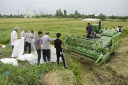 واردات برنج ۴ ماه متوقف شود
