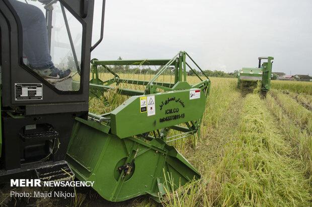 کشور در تولید برنج خودکفاست / طی شش ماه ۹۶۰هزارتن برنج وارد کردند