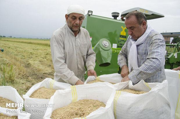 دولت برنج داخلی را خریداری کند/لزوم برخورد با ولنگاریهای فرهنگی