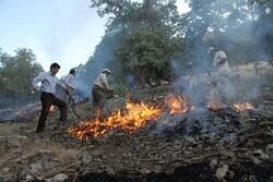 ۲۰ هکتار از جنگلهای بلوط کوهدشت طعمه حریق شد