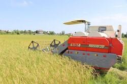 برداشت مکانیزه محصول برنج در شالیزارهای مازندران