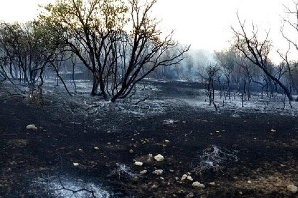 ۱۸۳۵ هکتار از عرصههای طبیعی کردستان در آتش سوخت