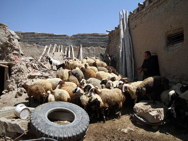 دور دوم اشتغالزایی بنیاد برکت در کردستان با ایجاد۴۶۰۰شغل