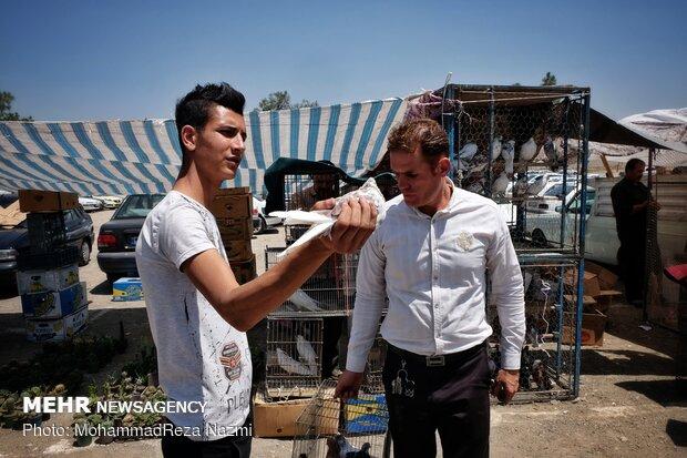 Tahran Süs Kuşları Pazarı