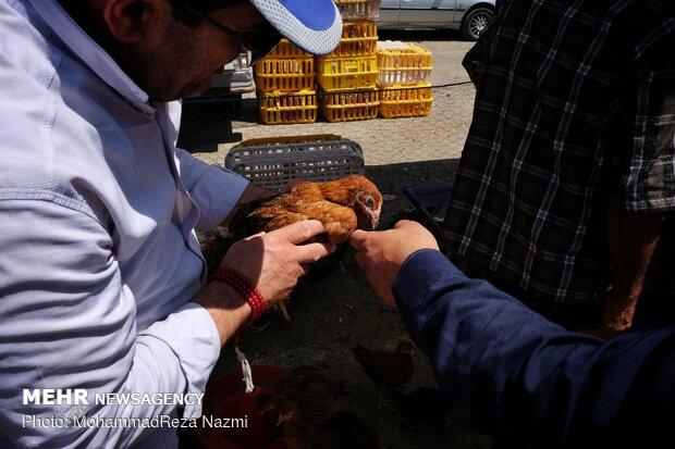 سوق طيور الزينة في طهران