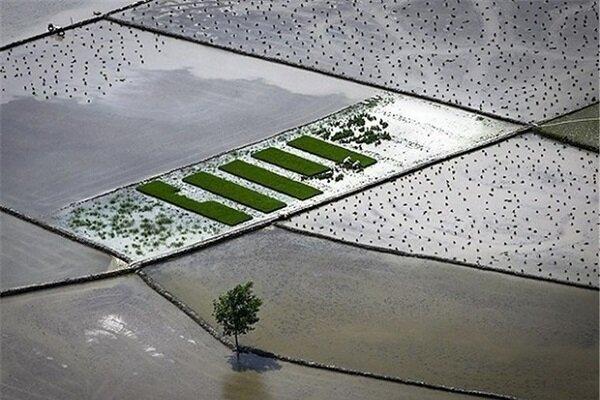 ۸۵ هزار هکتار از اراضی کشاورزی گیلان تجهیز و نوسازی شده است