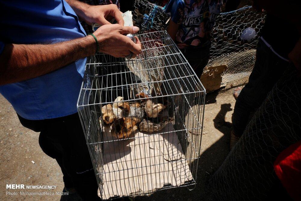 درخواست شهرداری برای برخورد با بازار غیر قانونی فروش حیوانات