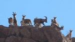ورود به پارک های ملی بمو، قطرویه و بختگان ممنوع شد