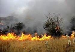 'Wildfire losses increase 90-fold in Tehran'