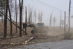 Dust storm incurs serious damages in Birjand