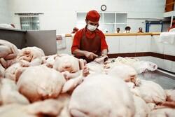 ۸ کشتارگاه صنعتی طیور در استان سمنان فعال است