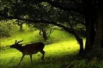 طبیعت بکر و ناشناخته جنگلهای ارسباران