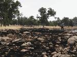 آتش بی امکاناتی جنگل های فارس را سوزاند/ سرمایه هایی که ازدست رفت