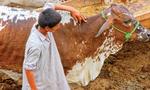 کراچی میں کانگو وائرس کا الرٹ جاری