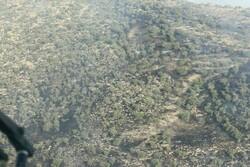 اجرای طرح حمایت از جنگلهای زاگرس/۱۰۰ هزار هکتار نهال کاری میشود