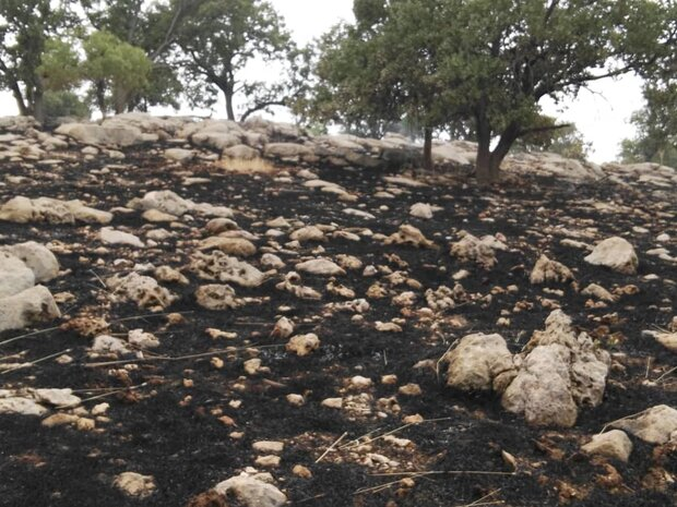 آتش سوزی عرصه های منابع طبیعی «رستم» بطور کامل اطفاء شد