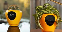 گلدان هوشمند رطوبت و دمای زیاد را به صاحب خود هشدار می دهد