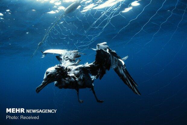 تاثیر زباله های انسانی بر محیط زیست زیر دریا