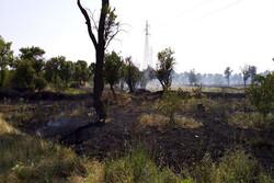 روند تخریب باغستان قزوین را متوقف کنید/ عزم مسئولان جدی نیست